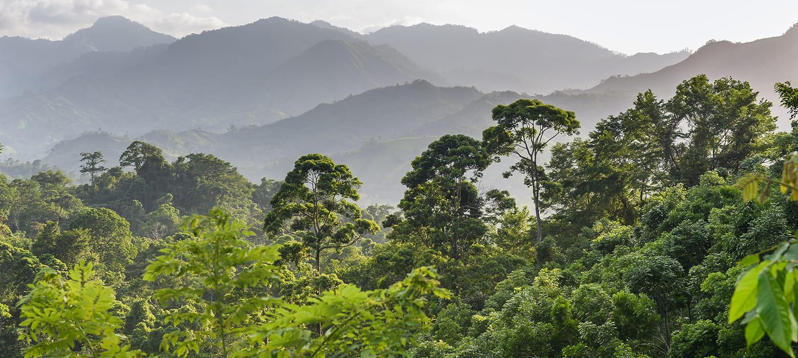 Záber na prales